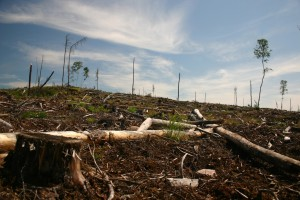 Clearcut-on-Grassy-Narrows-Territory--300x200