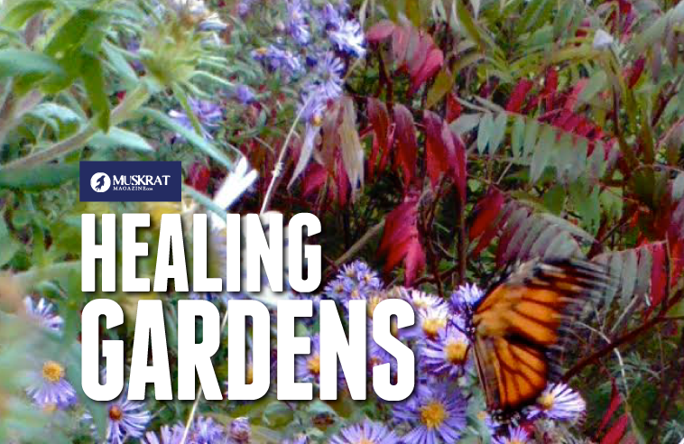 HEALING GARDENS: 7 INDIGENOUS MEDICINES IN YOUR BACKYARD
