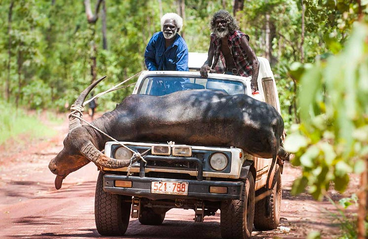 CHARLIE'S COUNTRY: ABORIGINAL AUSTRALIA AT TIFF BELL LIGHTBOX