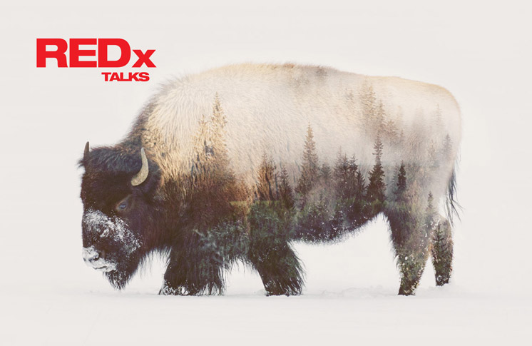 REDx Talks: The Buffalo Treaty to precede historic treaty event in Banff