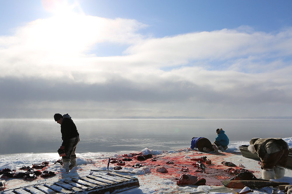 Isuaqtuq, Joannie and Perry Ikkidluak butchering bearded seal | Image source: Alethea Arnaquq-Baril