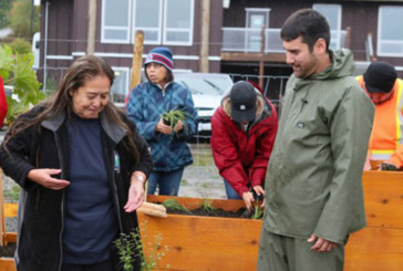 Project Between VIU And Snaw-Naw-As Preserves Traditional Plant Knowledge